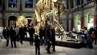 Brachiosaurus brancai, weltweit größtes Dino-Skelett Part 1/2