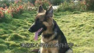2007年最新德國狼犬影片(GERMAN SHEPHERD)