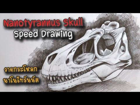 Nanotyrannus Skull - Speed Drawing (Juvenile Tyrannosaurus Rex)