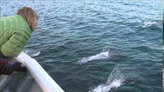 Lindblad Expeditions Explore Alaska Cruise, Travel Videos