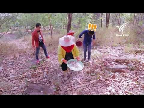 Foodwork ไข่มดแดง : แบงค์ - ปวริศร์ มงคลพิสิฐ : 11 พ.ค. 57 (HD)