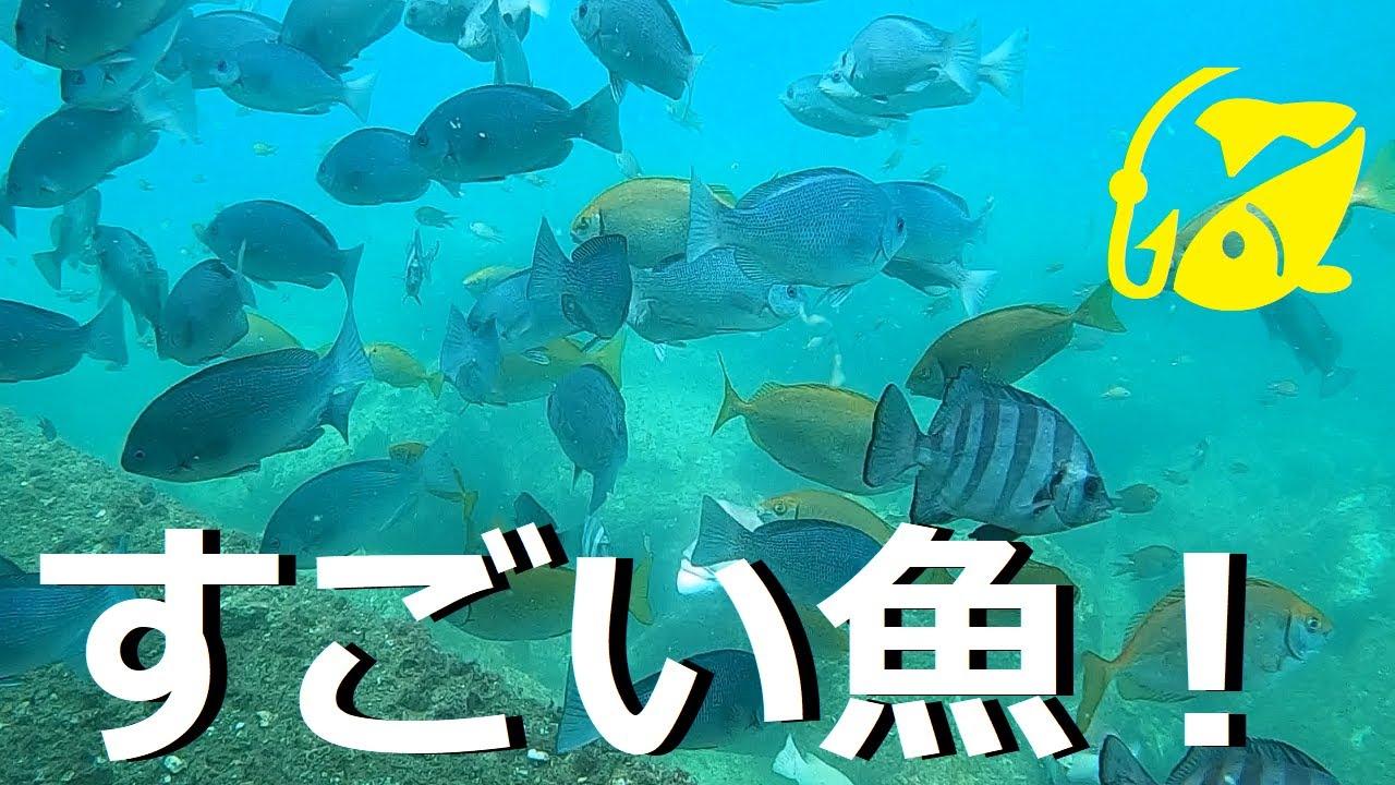 綺麗で癒しの海は多くの魚!和歌山の海釣り公園【水中映像】