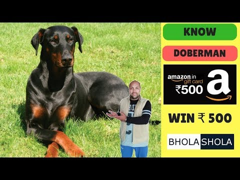 Pet Care -Know About Doberman - Bhola Shola