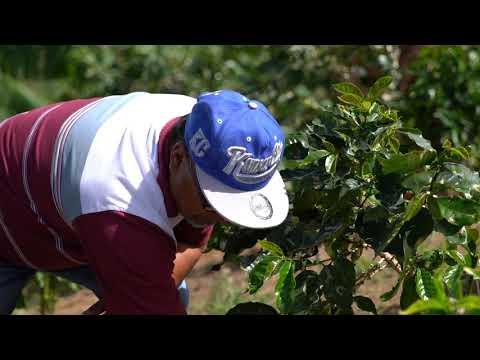Se siembra el árbol de café número un millón de la Hispanic Federation en Yauco