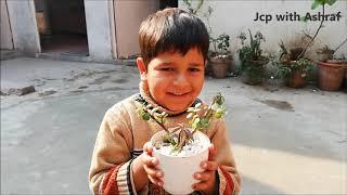 Bonsai-l, wie zu erstellen bonsai-l kostenlos bonsai