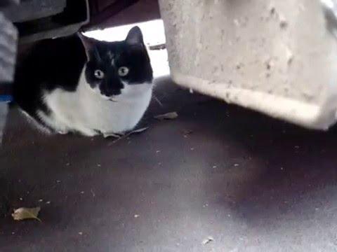 Автовладельцы будьте внимательны коты любят сидеть под авто