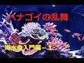【海水魚】入門編その1 ハナダイとハナゴイ! の動画、YouTube動画。