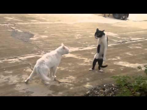 Кошачьи приколы . YouTube смотреть онлайн бесплатно
