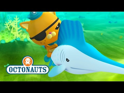 Octonauts: Sailfish Are Faster Than The Gup F