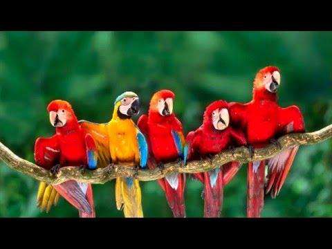 Best tourist attractions in Peru - Puerto Maldonado - Tambopata National Reserve