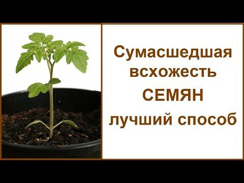 Вопрос: Как повысить всхожесть и ускорить прорастание семян петрушки?