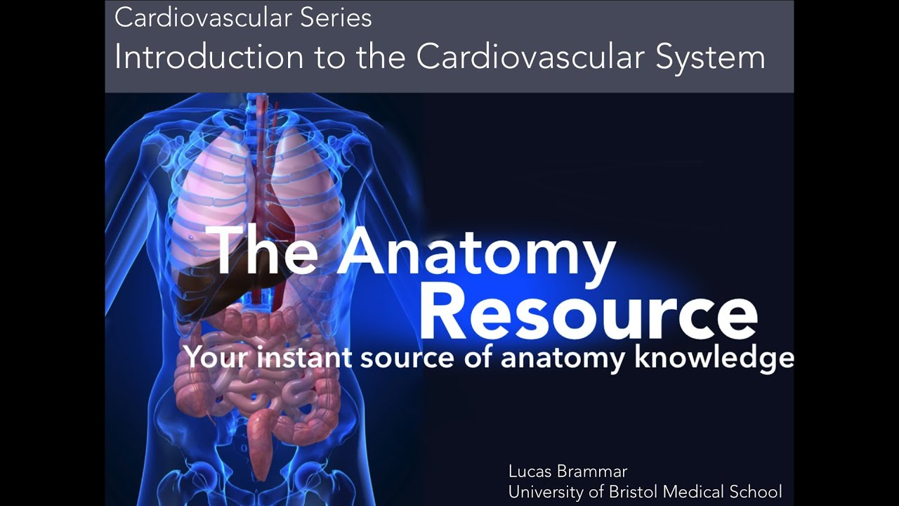 CVS Tutorial 1 Introduction to the Cardiovascular System - YouTube