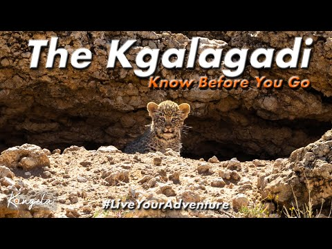 Kgalagadi Transfrontier National Park | Know Before You Go, Trip Report
