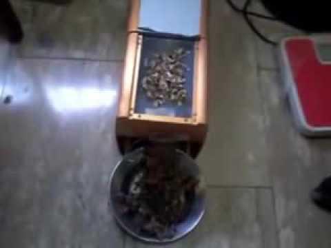 How to extract moringa oil