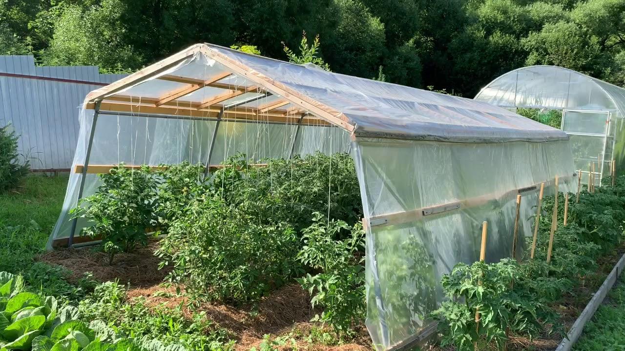 Проект гном томатный .(Dwarf tomato project).