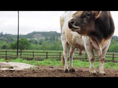 Organic Dairy Mpumalanga South Africa