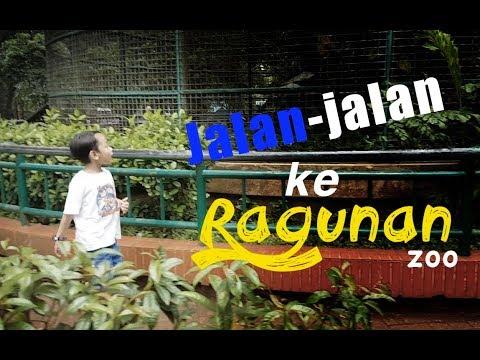 #VLOG3 - Jalan-jalan Ke Kebun Binatang Ragunan Jakarta - Ragunan Zoo