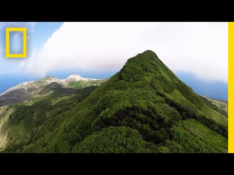 Once, This Island Had Just One Tree—Look at It Now | National Geographic