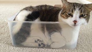 Видео приколы про кошек! Подборка №1!Лучшая подборка смешных моментов!