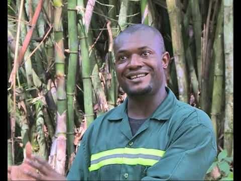 Bamboo for Development in Cameroon - Cameroon Radio Television (CRTV)