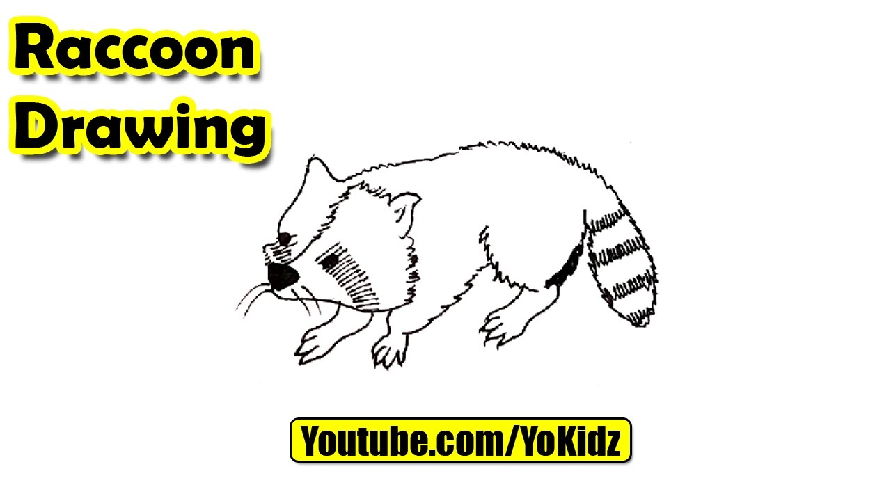 how to draw raccoon youtube