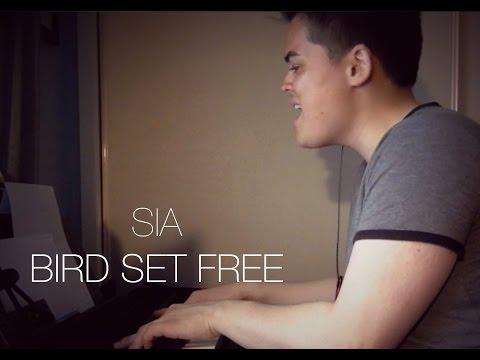 Sia - Bird Set Free (Cover)