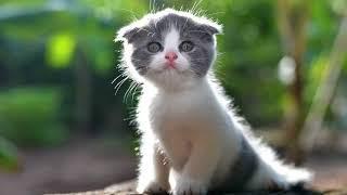 Как приучить котенка к рукам и ласке?