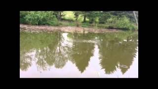 Bromdon fishing pools/ shropshire/ coarse fishing/method feeder/carp/bream/roach
