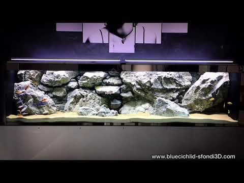 Acquario malawi con sfondo 3d