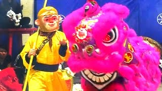 2016 Monkey and Lion Dance Performance - Boston Chinatown Main Street Community \u0026 Competition Event