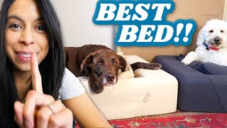EVERY DOG NEEDS THIS BED 🐶 You won't believe what this does 😱
