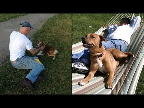 Dads Who Didnt Want The Damn Dogs In Their Lives (Part 2)