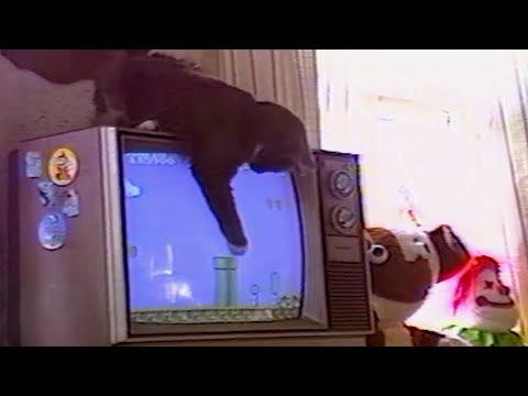BEST of 90s ANIMALS and KIDS FAILS – 90's KIDS will understand