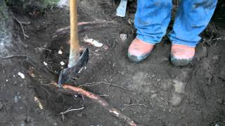 Stump Removal: Holistic Approach