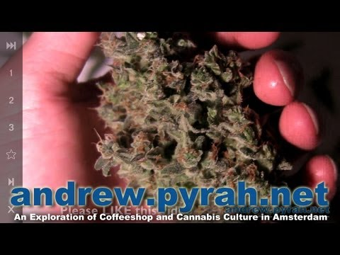 Royal Queen Seeds SWEET SKUNK AUTOMATIC Harvest & Trimming   Amsterdam Weed Review 2014