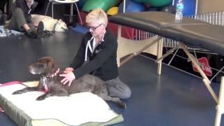 Assessment Massage Ipc Pet Parent Class 5 31 2015