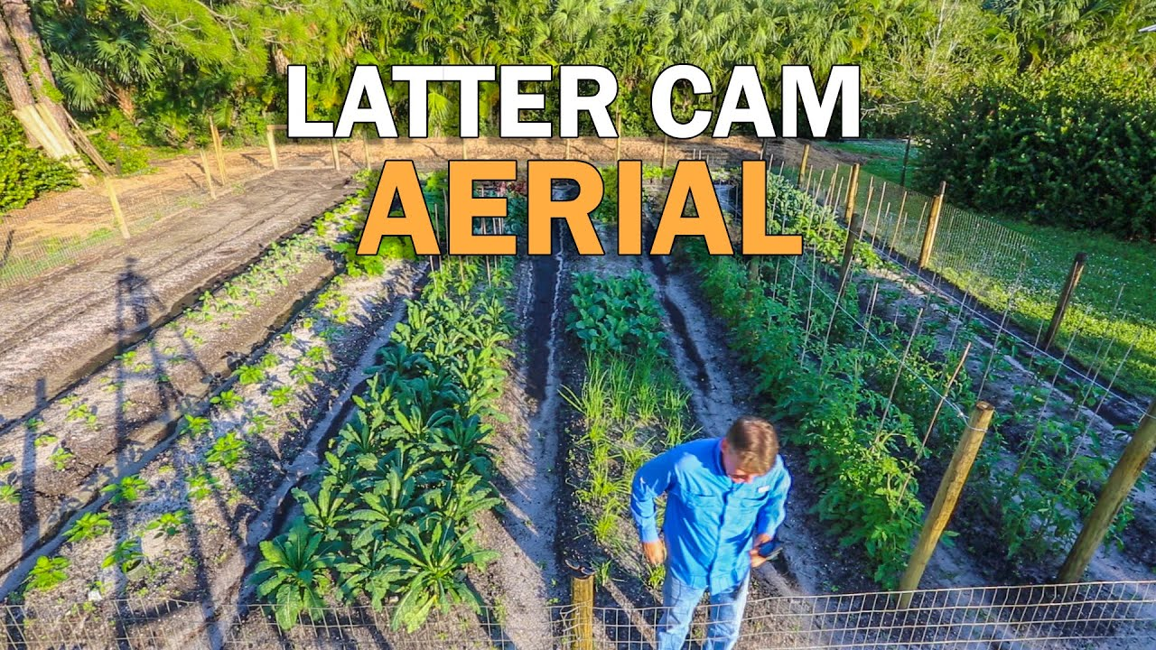 Latter cam what vegetable gardening in south florida - South florida vegetable gardening ...