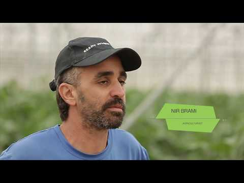 A DAY IN A LIFE OF AN ISRAELI FARMER