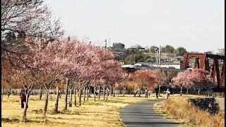 春の飯田線を走る特急伊那路