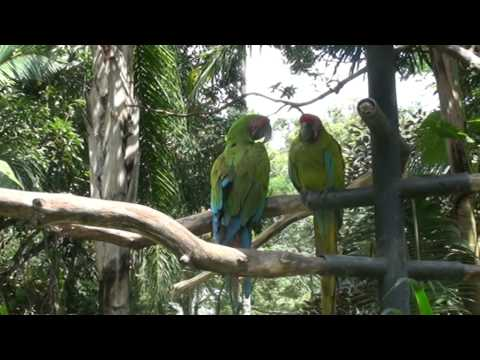 Costa Rica - Alajuela Zoo - Two parrots posing for the video