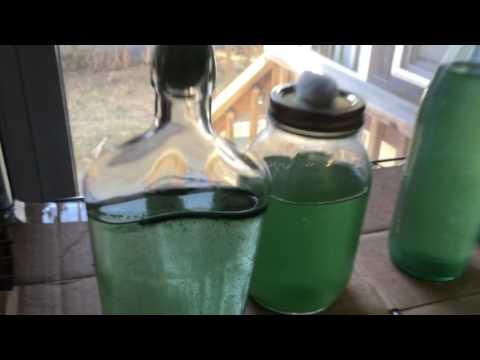 Home Spirulina Cultivation