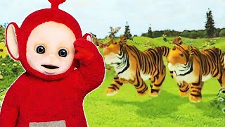 Teletubbies: Special Animals Compilation | 3 Hours of Teletubbies | Animal Parade