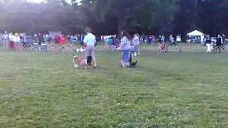 Dog Training, Toms River, Nj  - Obedience Demo