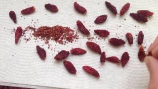 Получение семян мелкоплодной земляники своими руками.