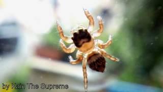 Un Ragno sulla Finestra - A Spider On The Window