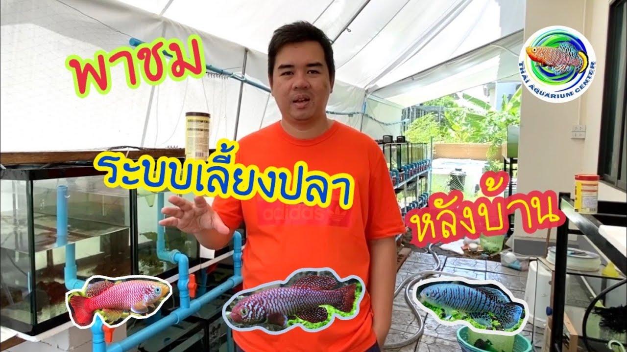 พาชม ฟาร์มปลา ระบบเลี้ยงปลา หลังบ้าน
