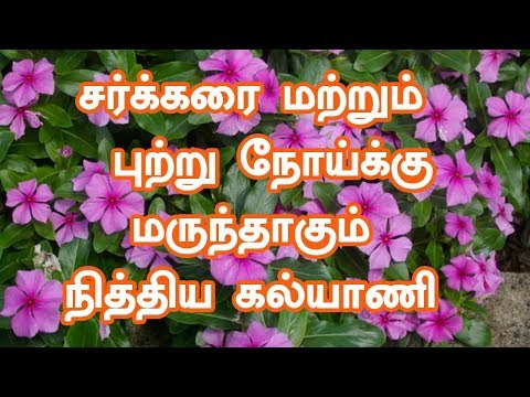 Nithyakalyani Plant | Health Benefits of Nithyakalyani in Tamil