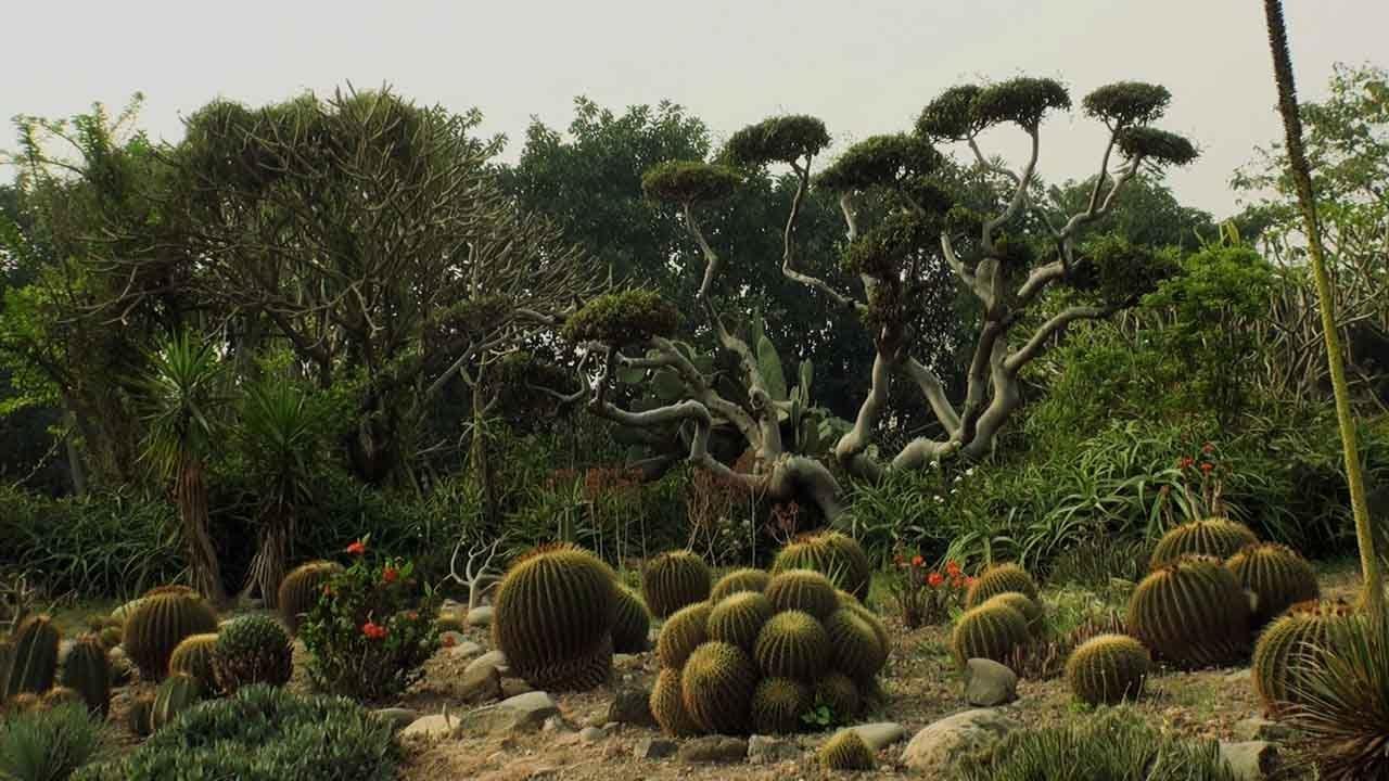 Cactus Garden Chandigarh Youtube