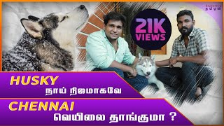 Siberian Husky நாயின் நிஜமுகம்|Siberian Husky full review in tamil|Siberian husky explained by owner