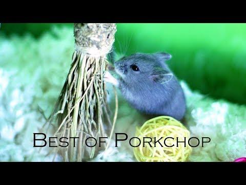 Best of Porkchop
